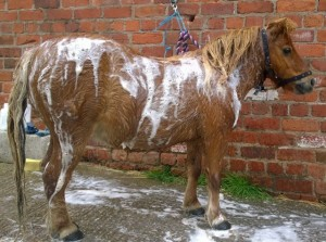 ponies - sundance bath
