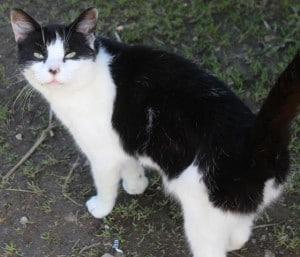 cats - poppy 21