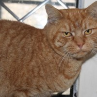 cats - pumpkin 2