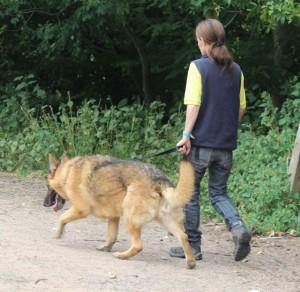 jerry lee walks 2