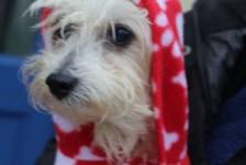 dogs - cristo in fleece