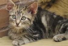 kittens - dino 1