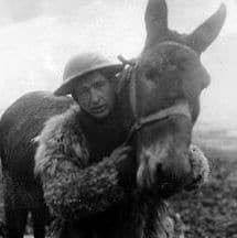 mule in war