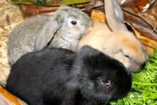 rabbits - amigos 4
