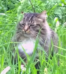 cats - tallulah
