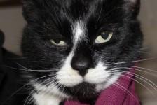 cats - zackary 2