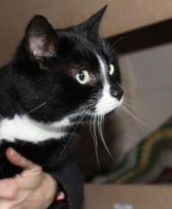 cats - zakary