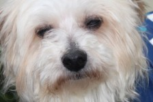 dogs - cristo better 2