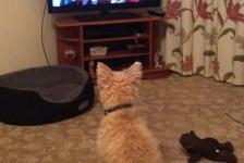dogs - errol tv