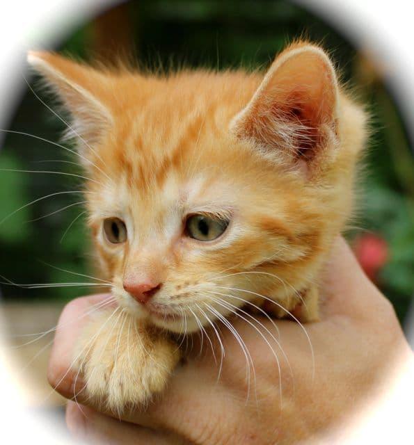 kittens - gingerboy
