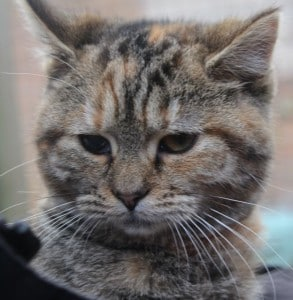 kittens - posy 5