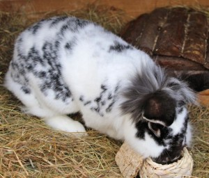 rabbits - daz 5
