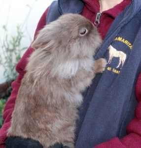 rabbits - fudge 5 - 1 (1)