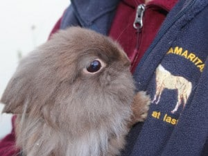 rabbits - fudge 5 - 1