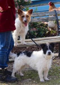 dogs - Basil & Bingo - 1