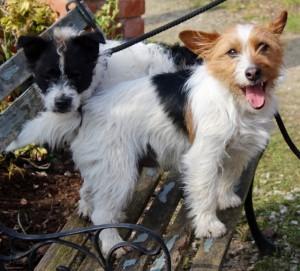 dogs - Basil & Bingo 4 - 1