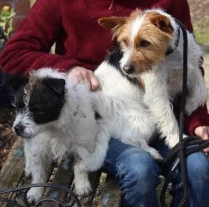 dogs - Basil & Bingo 8 - 1