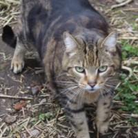 cats - Biggie - 1
