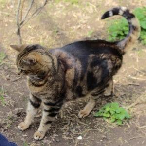 cats - biggie 10 - 1