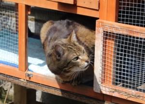 cats - biggie 18 - 1