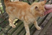 cats - jasper 15 - 1