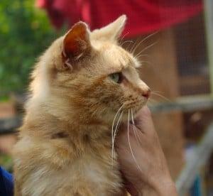cats - jasper 16 - 1