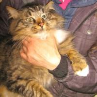 cats - talullah 6