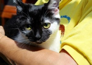 cats - trixie 7 - 1 (1)