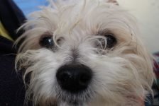 dogs - cristo 12