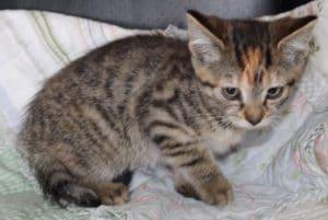kittens - della 6 - 1