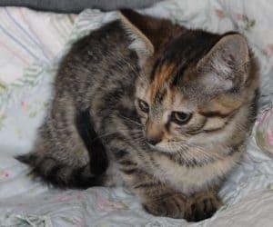kittens - della 7 - 1