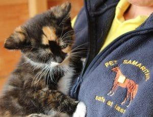 kittens - jasmine - 1