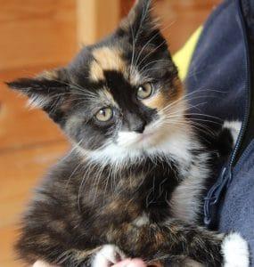 kittens - jasmine 2 - 1