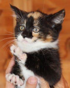 kittens - jasmine 3 - 1