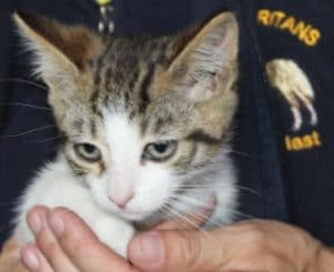 kittens - russell 2 - 1