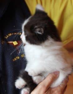 kittens - topcat 1 - 1