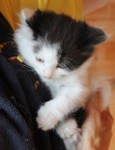 kittens - topcat - 1