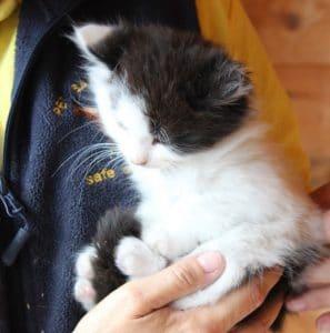 kittens - topcat 2 - 1