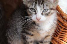 kittens - topcat 3 - 1