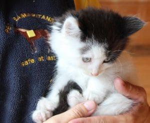 kittens - topcat 4 - 1
