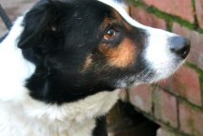 dogs - toby 1