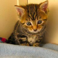 kittens - yum yums 5