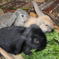 rabbits - amigos 2
