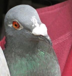 birds-pepi-2