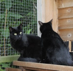 cats-mya-teko-2-1