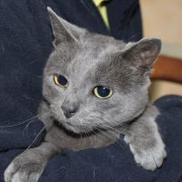 cats-rackham-1