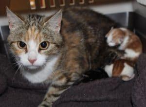 kittens-dumped-3-1