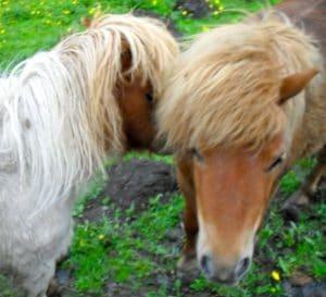 ponies-bridget-sundance