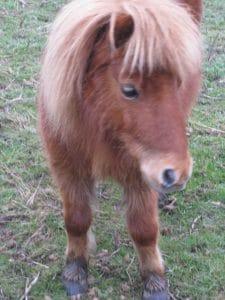 ponies-winter-sundance