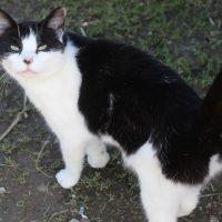 cat-poppy-23